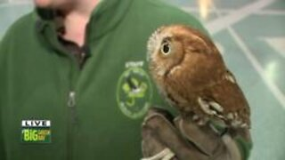 Give BIG Green Bay - Wildlife Sanctuary