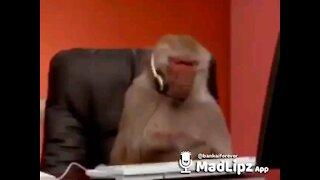 Intelligent monkey blocking people on keyboard funny
