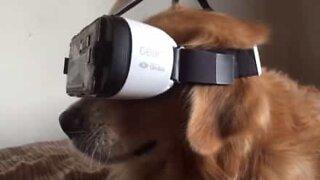 Hund eksperimenterer med virtuell VR headset