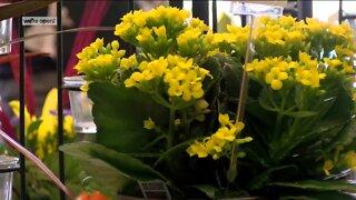 Snapdragon arranging smiles, flowers