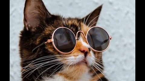 Cute kitten funny videos kitten 2021