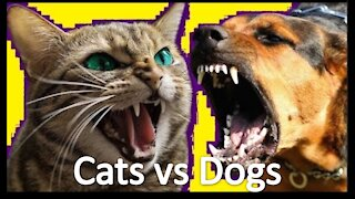 Funny Cats vs Dogs Compilation   Cats & Dogs Fighting