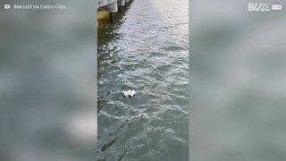 Homem resgata pelúcia de rio