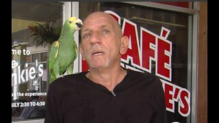 Missing bird has been recovered