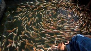 Fish Spa Feeling