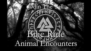 Bike Ride - Animal Encounters