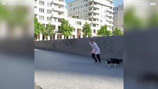 Cão adora fazer parkour com o seu dono!