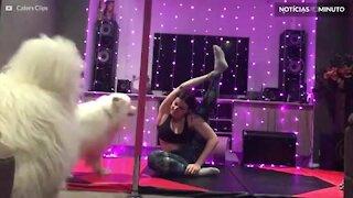 Quando cães dificultam a pratica de yoga