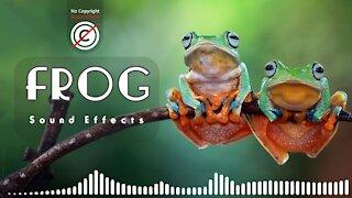 Frog Sound Effects | frog sounds | Frog Noises | HQ