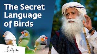 The Secret Language of Birds – Sadhguru Exclusive Preview