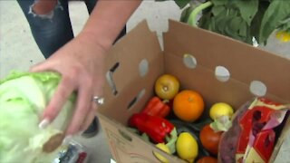 South Florida farmers to plant peppers, cucumbers this week