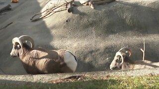 Buffalo Zoo asks for donations