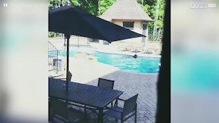 Un orso invade la piscina di casa