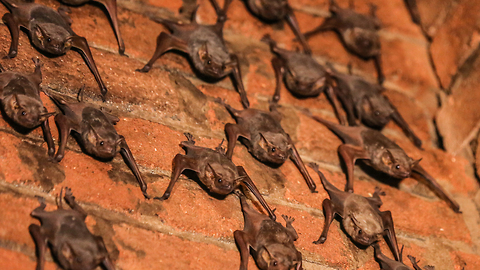 Woman In India Lives With 500 Bats
