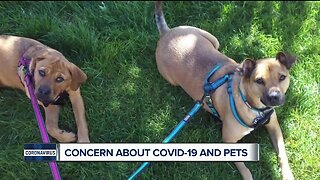 Concern about COVID-19 and pets