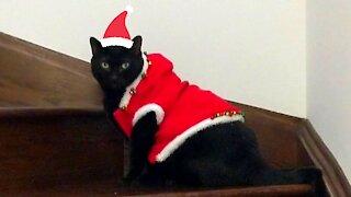 Santa Steve is coming to town!