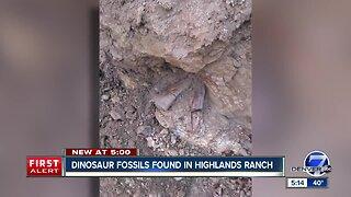 Construction crews dig up dinosaur fossils in Highlands Ranch