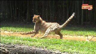 Awesome Animals | Morning Blend
