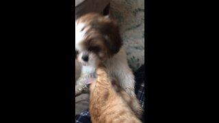 Cat boxing dog