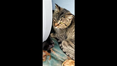 Hissy moved the kittens again, I found them.😻🐈🐾ひっしーさんがまた子猫を移動させたので、見つけました🐈。🐾😻