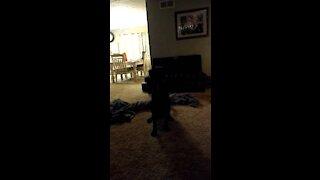 Rocky love the laser!