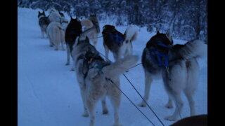 Husky Dog Sledding in Fairbanks, Alaska