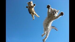 Most Amazing Cat Ninja Videos!