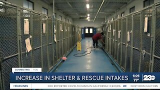 Increase in shelter and rescue intakes