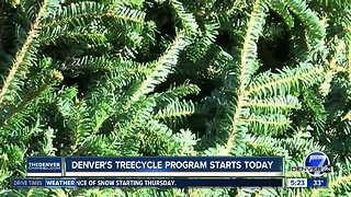 Denver's treecycle program starts today