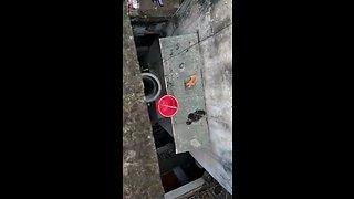 Heroic kitten rescue from dangerous building ledge