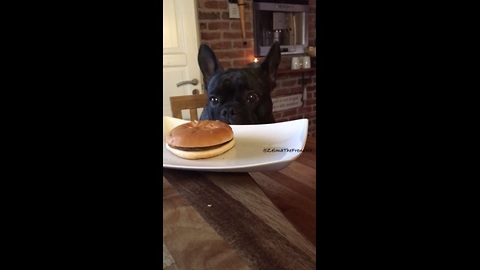 Smart Frenchie chooses healthy dish over fast food