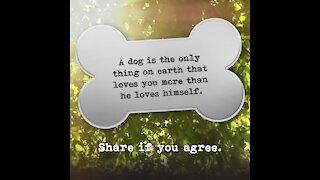 Dog loves you more than himself [GMG Originals]