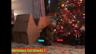 Christmas Cat Attacks 2!