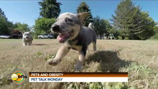 Pet Talk Tuesday - Pets and obesity
