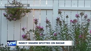 Dragonflies swarm across Northeast Ohio