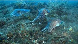Episk blekksprutkamp!