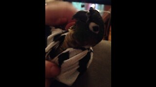 Cute Parrot Dancing