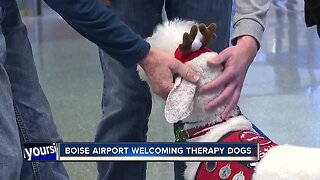 Therapy dogs at Boise Airport