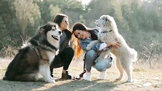 Cute dog pets animal shelter
