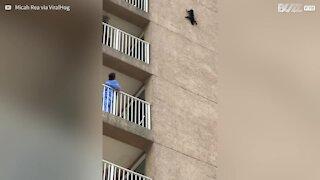 Procione si lancia dal sesto piano di un edificio negli USA