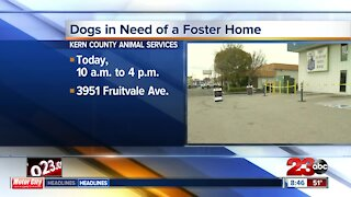 Dogs in need of a foster home