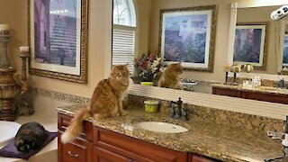 Cats are not impressed with window & floor cleaning robots