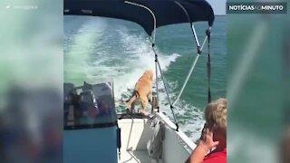 Cão vê um golfinho pela primeira vez