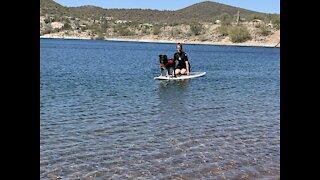Aussie Shepherd becomes a water dog