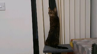 Funny cat looking on window