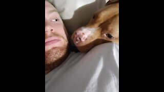 Pup has super sweet reaction every time owner kisses him