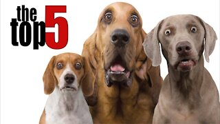 TOP 5 Funny Dog Jokes Told By Comedians ft. Bill Burr, Louis CK, George Carlin & Jerry Seinfeld