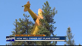 Crews working to remove plane from trees