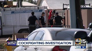 Cockfighting ring busted in south Phoenix