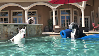 Water Loving Great Danes Jump Onto Frontgate Pool Float Lilo